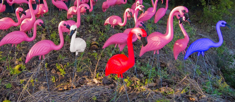 patriotic flamingos